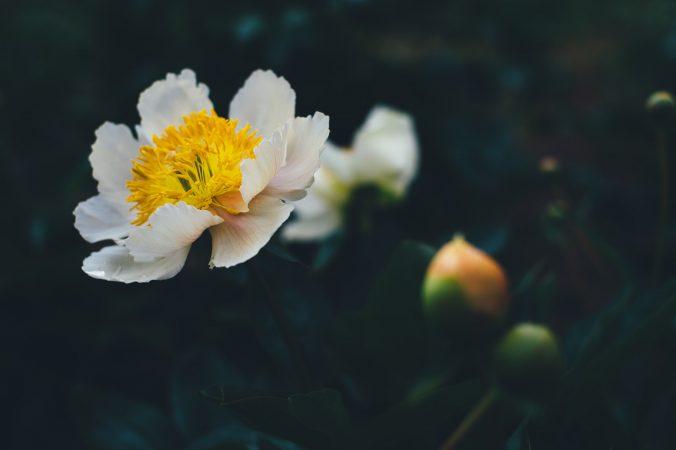 Flowers - Annie Spratt